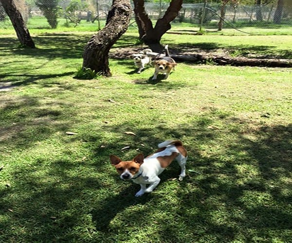perth-pet-dogs-open-spaces